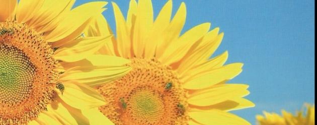 Emodialisi - I comportamenti che aiutano a stare bene